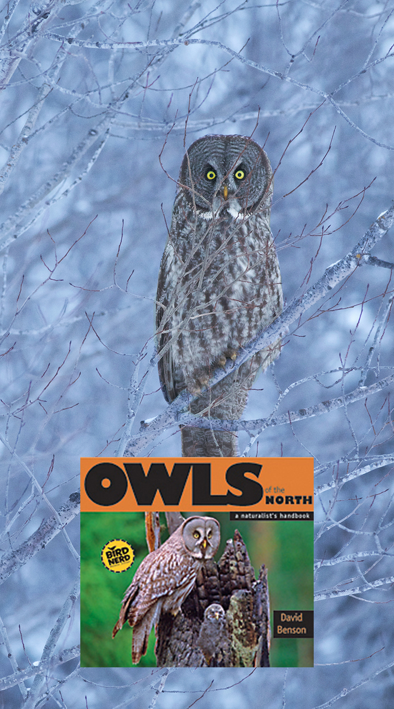 Great Gray Owls breed and winter in the Sax-Zim Bog [December; McDavitt Road, Sax-Zim Bog, St. Louis County, Minnesota]